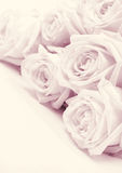 Beautiful pink roses toned in sepia as wedding background. Soft Stock Photography