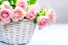 Beautiful, pink roses in a white basket close up. Beautiful, pink roses in a white wicker basket close up Royalty Free Stock Photo