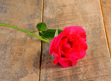 Beautiful pink roses on wooden  background Stock Photos