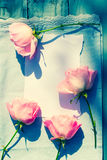 Beautiful, pink roses on wooden, rustic background Stock Images