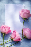 Beautiful, pink roses on wooden, rustic background Stock Photos