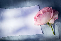 Beautiful, pink roses on wooden, rustic background with white paper and copy space Royalty Free Stock Photography