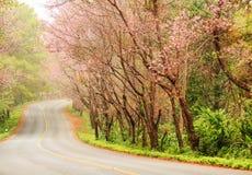 Beautiful pink sakura landscape view on road. Stock Photos