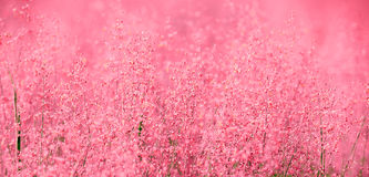 A beautiful pink scene of nature royalty free stock photography