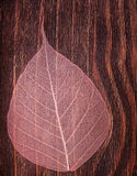 Beautiful pink see-though leaf on an old vintage background Royalty Free Stock Photos