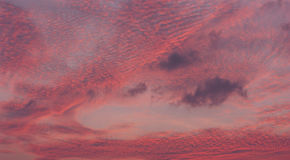 Beautiful pink sky after sunset Royalty Free Stock Image