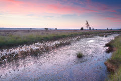 Beautiful pink sunrise over swamp Stock Photography