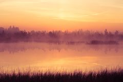 A beautiful, pink sunrise ower the swamp. Sun rising in wetlands, purple misty atmosphere. Latvia, Northertn Europe royalty free stock photo