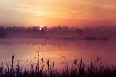 A beautiful, pink sunrise ower the swamp. Sun rising in wetlands, purple misty atmosphere. Latvia, Northertn Europe stock image