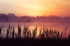 A beautiful, pink sunrise ower the swamp. Sun rising in wetlands, purple misty atmosphere. Latvia, Northertn Europe stock photos