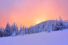 Beautiful pink sunset shine enlightens the picturesque landscapes with fair trees covered with snow. royalty free stock photo
