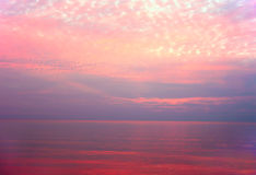 Beautiful pink sunset water background. Reflection of the sky in water Stock Image