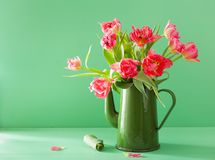 Beautiful pink tulip flowers bouquet in green tea pot Stock Photo