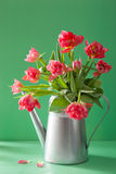 Beautiful pink tulip flowers bouquet in watering can Royalty Free Stock Photos