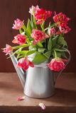 Beautiful pink tulip flowers bouquet in watering can Royalty Free Stock Photo