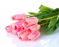 Beautiful pink tulips Stock Photo