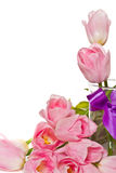 Beautiful pink tulips Stock Photo