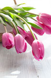 Beautiful pink tulips Royalty Free Stock Images