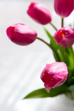 Beautiful pink tulips Royalty Free Stock Photography