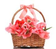 Beautiful pink tulips in basket Stock Image