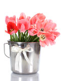 Beautiful pink tulips in bucket Royalty Free Stock Photo