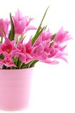 Beautiful pink tulips in a bucket. Stock Images