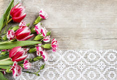 Beautiful pink tulips and carnations Royalty Free Stock Photo