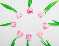 Beautiful Pink tulips flowers frame on white background. Royalty Free Stock Image