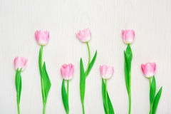 Beautiful Pink tulips flowers on wooden white background. Royalty Free Stock Photography
