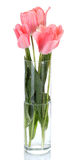 Beautiful pink tulips in glass vase Royalty Free Stock Image