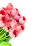 Beautiful Pink Tulips with love, isolated Stock Photos