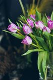 Beautiful pink tulips in vase. Beautiful pink tulips in a vase Royalty Free Stock Photo