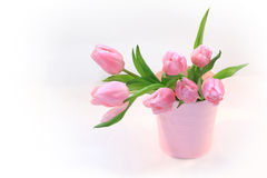 Beautiful pink tulips in the vase Stock Images