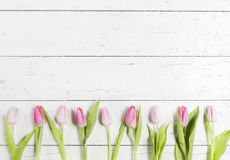 Beautiful pink tulips on white background Stock Photo