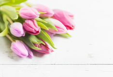 Beautiful pink tulips on white background Stock Photography