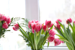 Beautiful pink tulips on windowsill stock photo