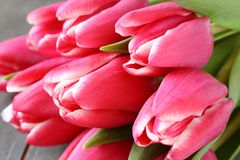Beautiful pink tulips on wooden background Stock Image
