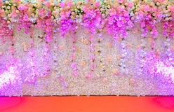Beautiful pink and white flower backdrop white spot light. stock images
