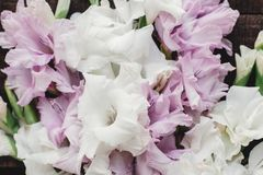 Beautiful pink and white gladioluses on rustic wooden background Royalty Free Stock Photos