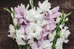 Beautiful pink and white gladioluses on rustic wooden background Royalty Free Stock Images