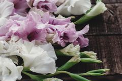 Beautiful pink and white gladioluses on rustic wooden background Stock Photography