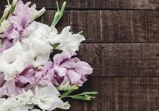 Beautiful pink and white gladioluses on rustic wooden background Royalty Free Stock Photography