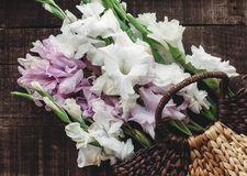 Beautiful pink and white gladioluses in stylish wicker basket on Royalty Free Stock Photo
