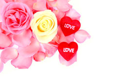Beautiful pink & white rose and  red heart of love on white background. Royalty Free Stock Photo