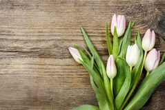 Beautiful pink and white tulips on wooden background Stock Image