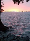 Beautiful pink and yellow summer sunset on Reelfoot Lake royalty free stock photography
