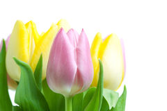 Beautiful pink and yellow tulip bouqet. Isolated on white background stock image