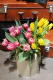 Beautiful pink and yellow tulips Stock Image