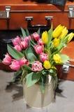Beautiful pink and yellow tulips Stock Image