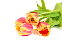 Beautiful pink  with yellow tulips Royalty Free Stock Image